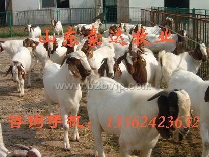 山东豪达肉牛肉羊养殖基地-专业牛羊养殖技术